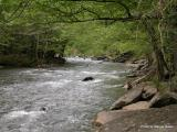Little Pigeon River.JPG