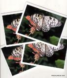 butterfly note cards.jpg