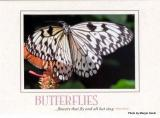 butterflies premium note card.jpg
