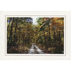 Forest Road Premium Note Card